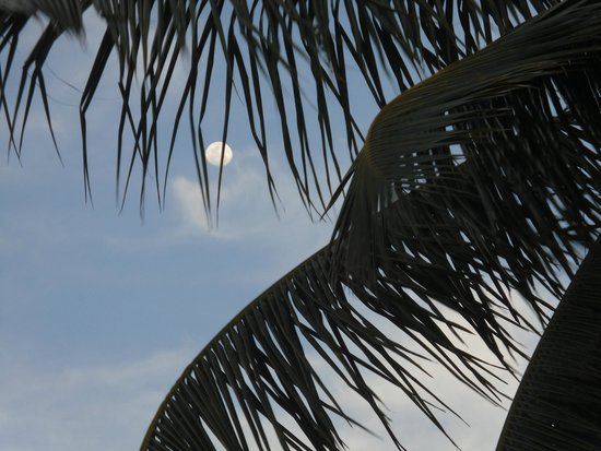 Robert's Grove Beach Resort : Moon over RG