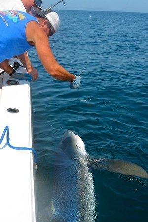 Reel Deal Fishing Charters: Big Blue!!!