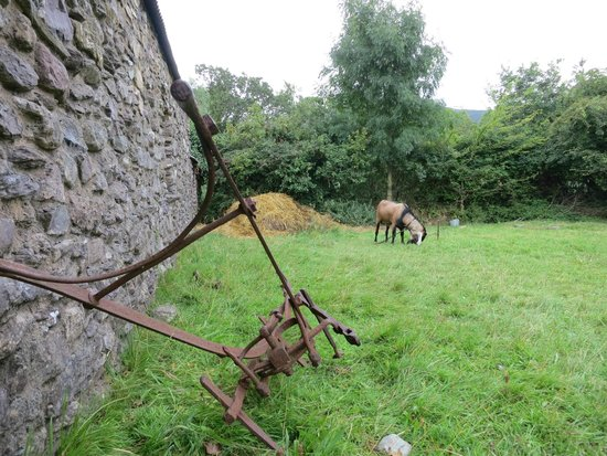 Muckross Traditional Farms: Animal by the small farm