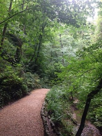 Shanklin Chine: Walking down the chine...