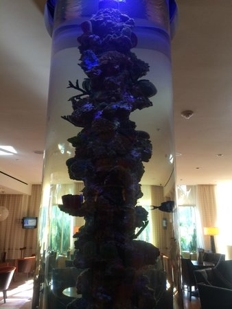 JW Marriott Marco Island Beach Resort: Aquarium in Lounge/Sushi Bar