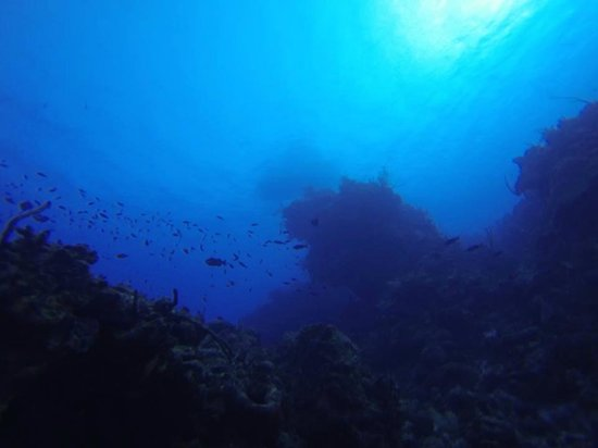 Living The Dream Divers: Looking up the wall