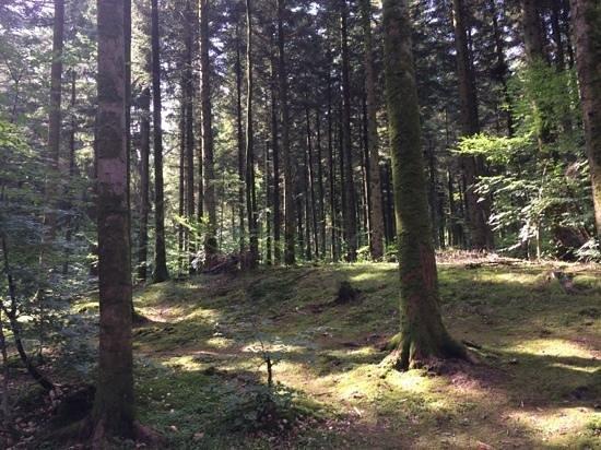 Center Parcs - Domaine des Trois Forets: la forêt