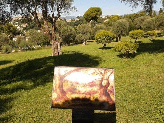 Musée Renoir : Parco