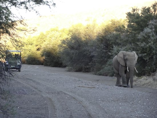 Sanbona Wildlife Reserve: Encounter with the Elephants