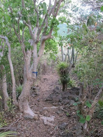 Guana Island: Hiking trails.  This one marked with blue ribbons.