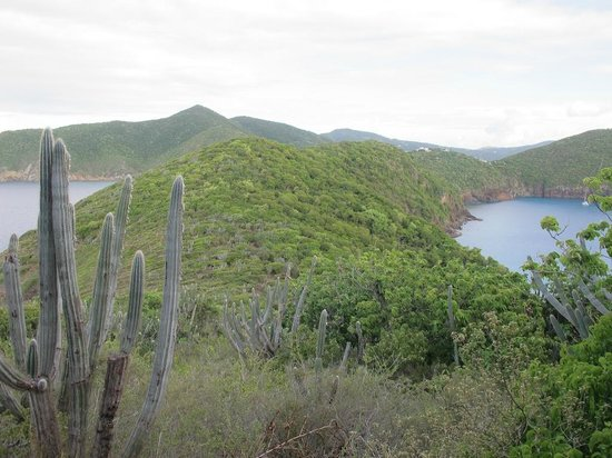 Guana Island : View back towards the cottages from a hiking path