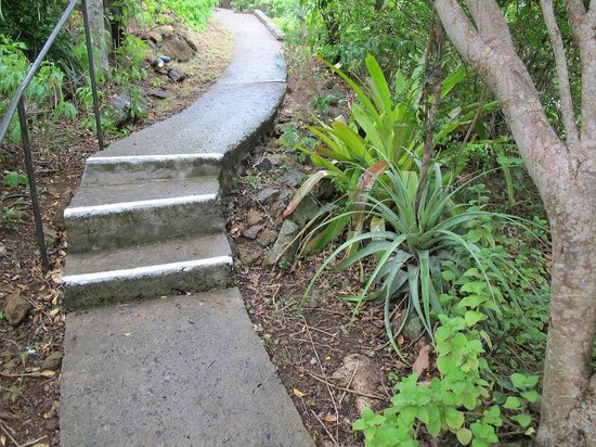 Guana Island: Private pathway up to our cottage