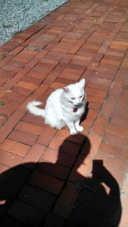 The Watson Guest House : Clyde The Watson House's outside cat!