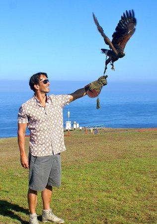Sky Falconry