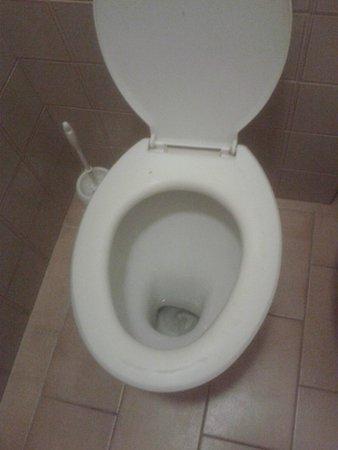 Le Querce: wc con ciambela rovinata