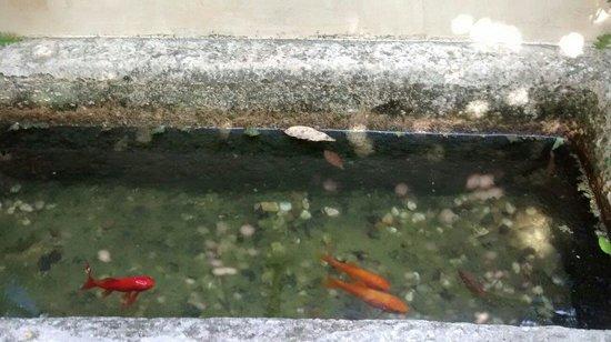 L'Hort de Sant Cebrià: Peces en fuente