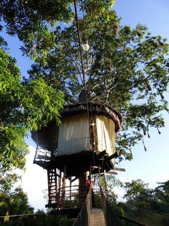 Treehouse Lodge : Treehouse views