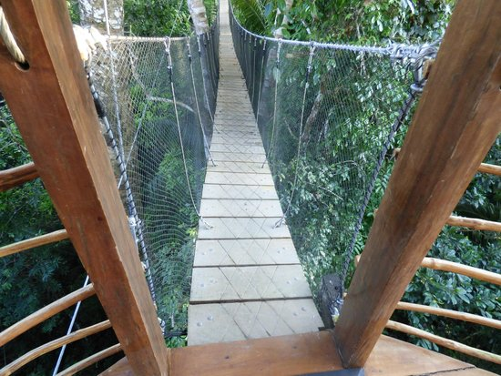 Treehouse Lodge : Getting from lodge to lodge.