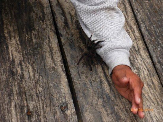 Treehouse Lodge : Tarantulas.
