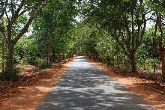 Matrimandir: The Road to Auroville