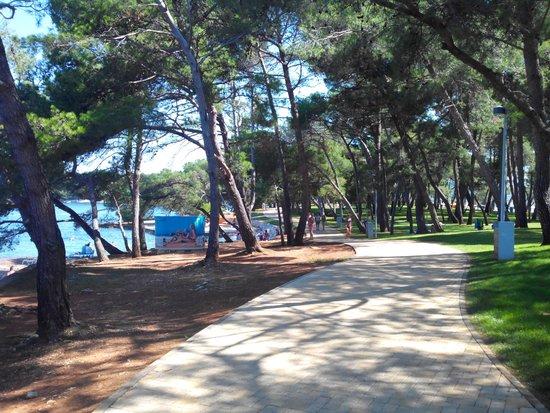 Camping Bijela Uvala : promenade