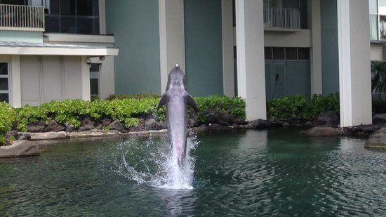 The Kahala Hotel & Resort: Dolphin time