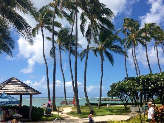 The Kahala Hotel & Resort: Beautiful Palm Trees