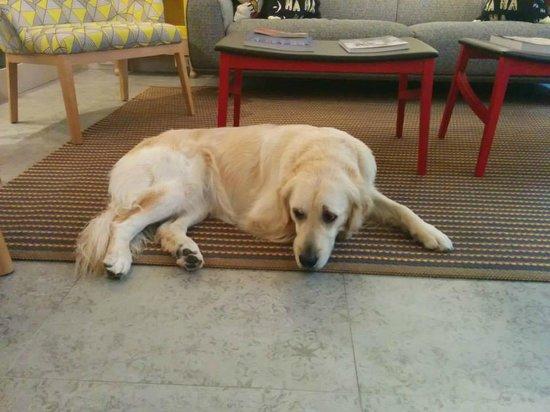 Hotel Signature St Germain des Pres: Samba - Delphine's dog