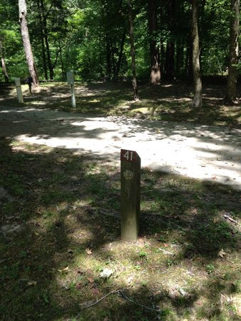 Meeman-Shelby Forest State Park: Site 41, near playground