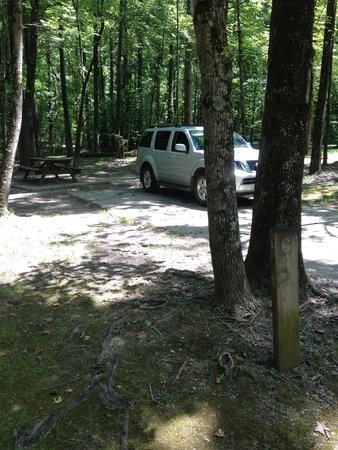 Meeman-Shelby Forest State Park: Site 6, near bath house. & not too far from playground .