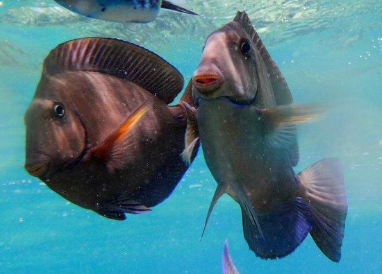 Paradisus Rio de Oro Resort & Spa: poissons des caraibes