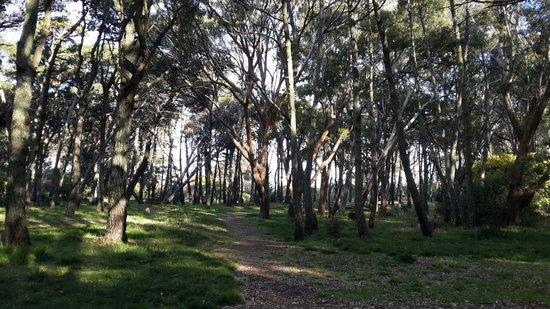 Parque Municipal Vivero Cosme Argerich: Bosque al costado de la playa @fechuherrera