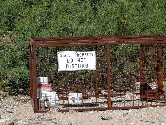 Lake Havasu State Park: Traps to catch wild pigs
