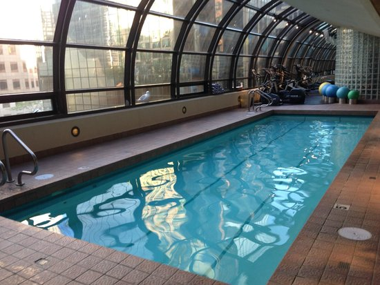 Metropolitan Hotel Vancouver: A seagull came to check out the pool!