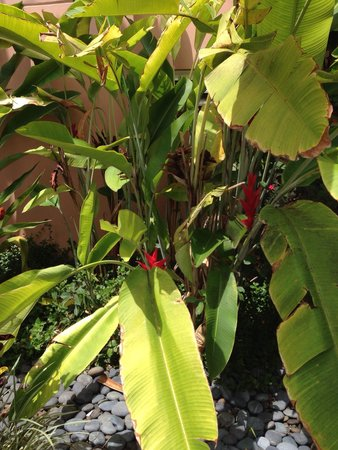 Grand Wailea - A Waldorf Astoria Resort: Plants