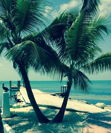Lime Tree Bay Resort : Palms and pier
