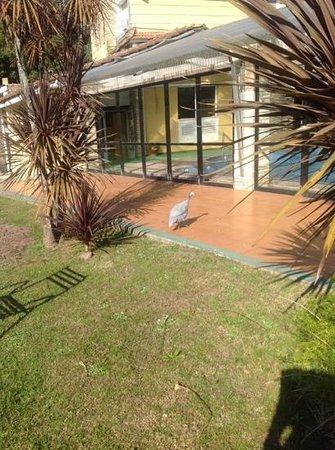 Paradiso- Resort & Eventos : la piscina