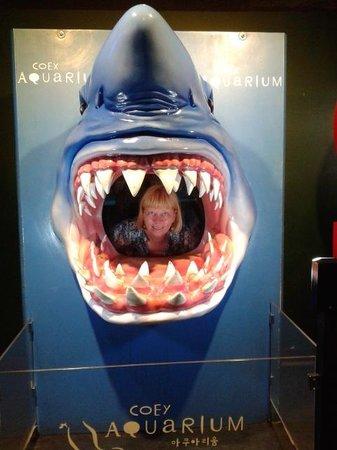 Coex Aquarium: я-в акуле