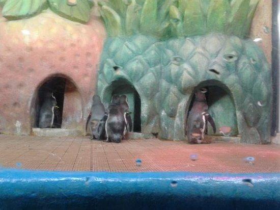 Coex Aquarium: рыбки