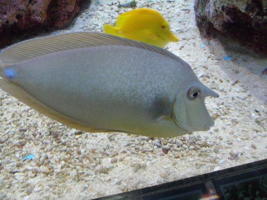 Coex Aquarium: смешная рыбка