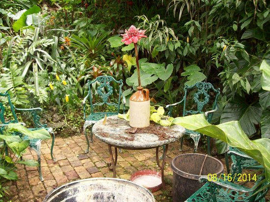 Hunte's Gardens : even a jug is use for a pot