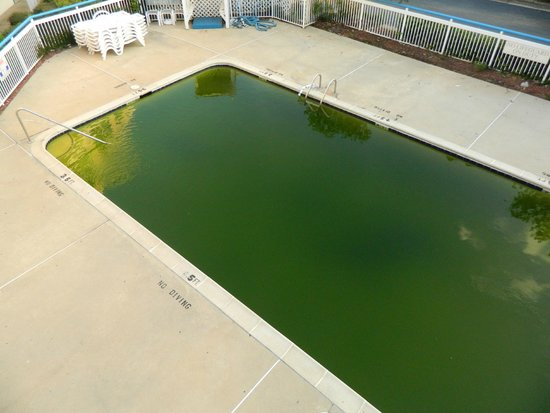 Motel 6 Raleigh North: 100' and the pool looked like this