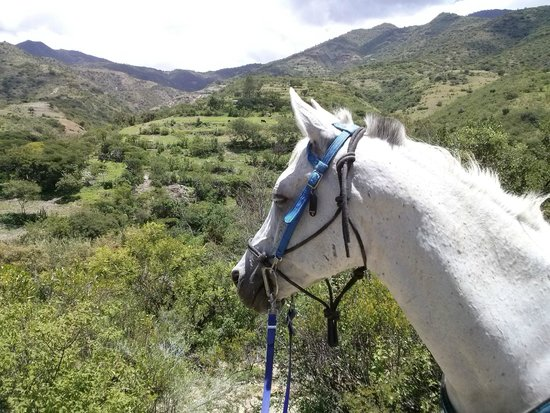 ‪Horseback Mexico - Day Tours‬
