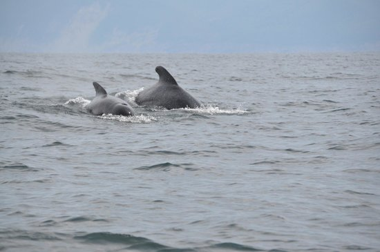 Capt. Mark's Whale and Seal Cruise : pilot whales