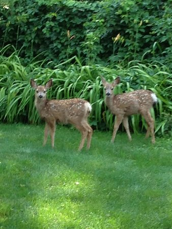 Lake Park Campground and Cottages: Spring Arrivals