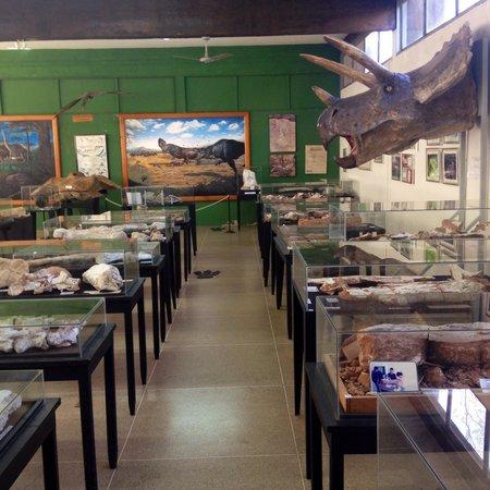 Paleontologia de Monte Alto Museum