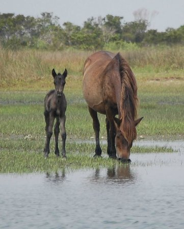 Seavisions Charters: When did you see a truly wild foal...?