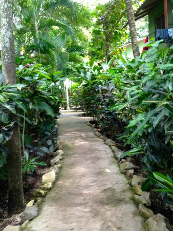 KayaSol Surf Hotel : Path from our room