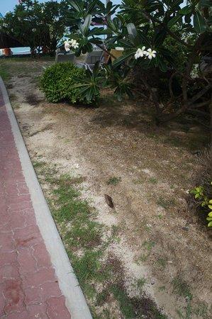 P.P. Erawan Palms Resort : Jardins mal cuidados