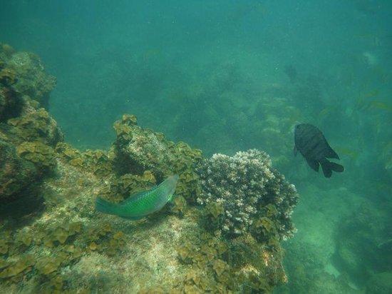 Maehaad Bay Resort : Perfekt zum Schnorcheln!