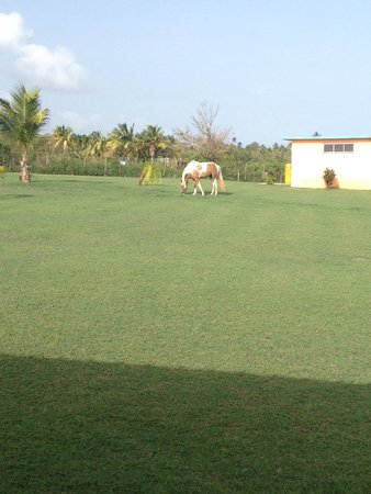 Hector's by the Sea: Topaz the horse!