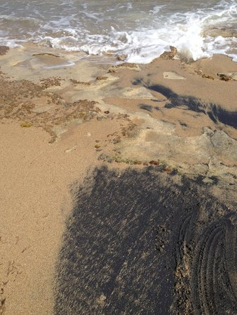 Hector's by the Sea: partial black sand beach right at the base of the pasture at Hector's