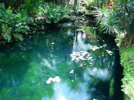 IBEROSTAR Paraiso Del Mar: Beautiful cenote in the hotel property