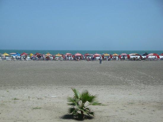Hotel Dann Cartagena : Beach canopies